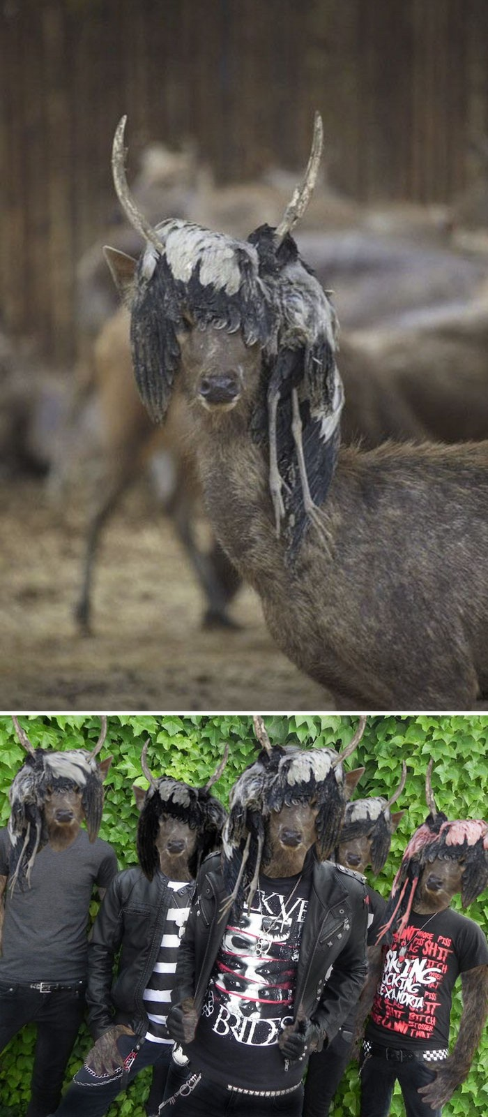 11 Epic Photoshop Battles - This deer wearing a dead bird wig!