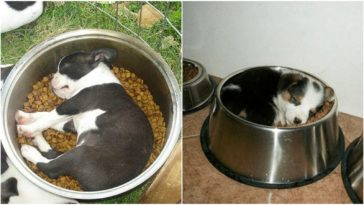 25 Adorable Dogs Asleep in Their Food Dish Is Happiness in a Bowl.