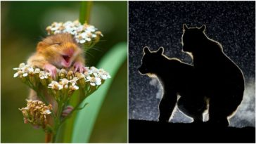 Winners of the 2017 Comedy Wildlife Photography Awards.