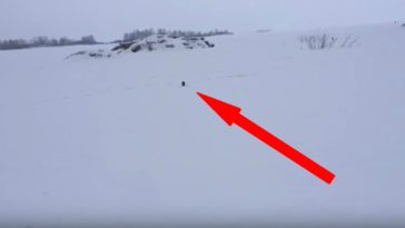 Brazen Mink Runs up to Fisherman and Takes One of His Fish.