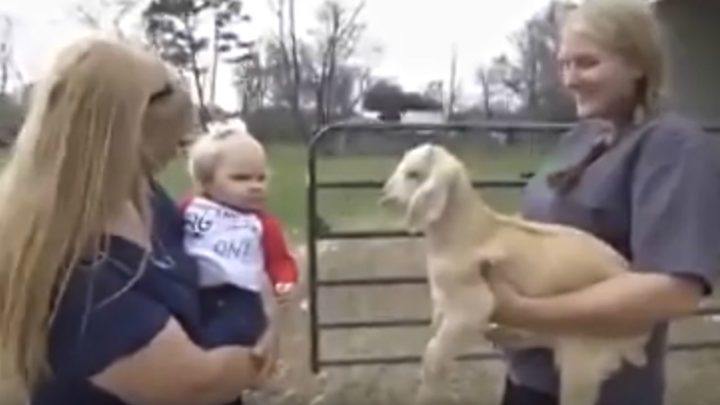 Tiny Toddler and Baby Goat Have a Real Conversation and It's Hilarious.