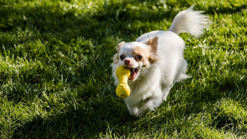 11 Best Small Dog Toys for Your Favorite Little Pooch