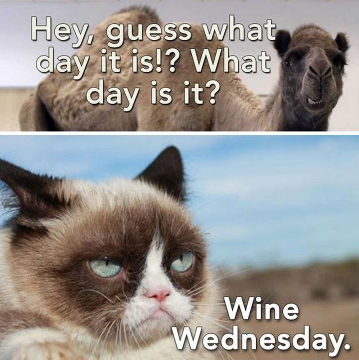 "15 Funny Wednesday Memes - ""Hey, guess what day it is!? What day is it? Wine Wednesday."""
