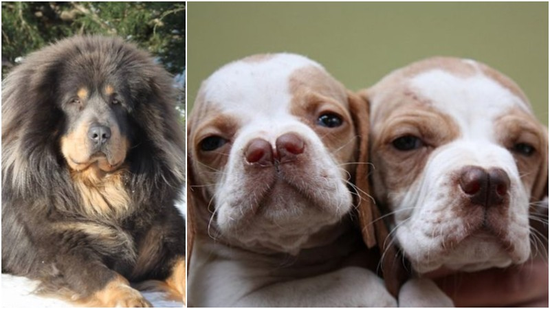 23 Rare Dog Breeds That Would Make Very Special Family Pets.