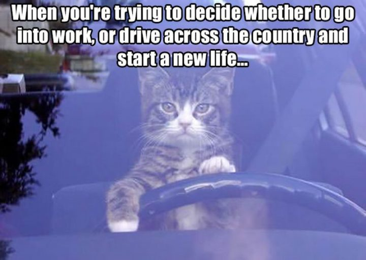 "27 Funny Work Memes - ""When you're trying to decide whether to go to work or drive across the country and start a new life..."""