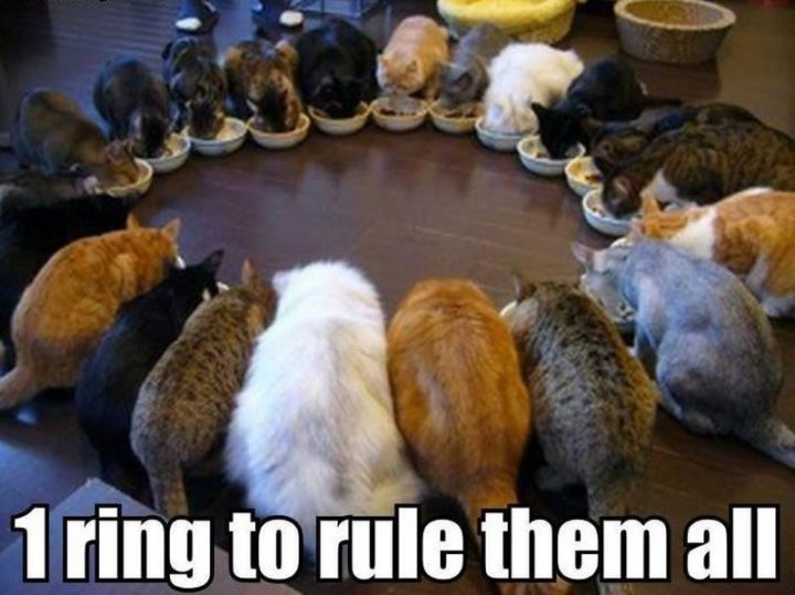 "55 Funny Cat Memes - ""1 ring to rule them all."""