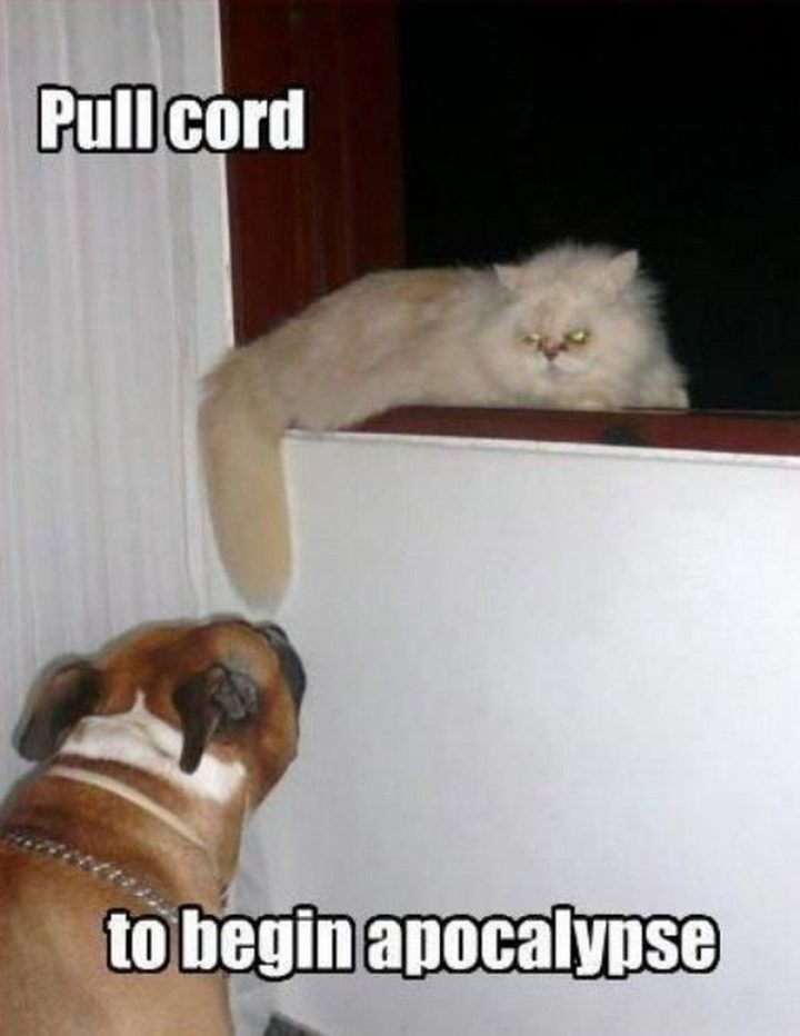 "55 Funny Cat Memes - ""Pull cord to begin apocalypse."""