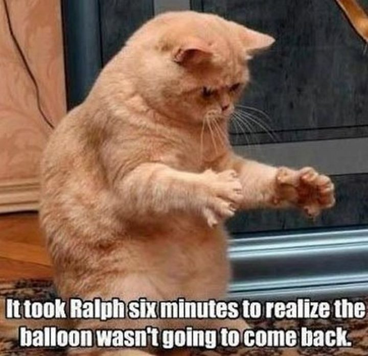 "55 Funny Cat Memes - ""It took Ralph six minutes to realize the ballon wasn't going to come back."""