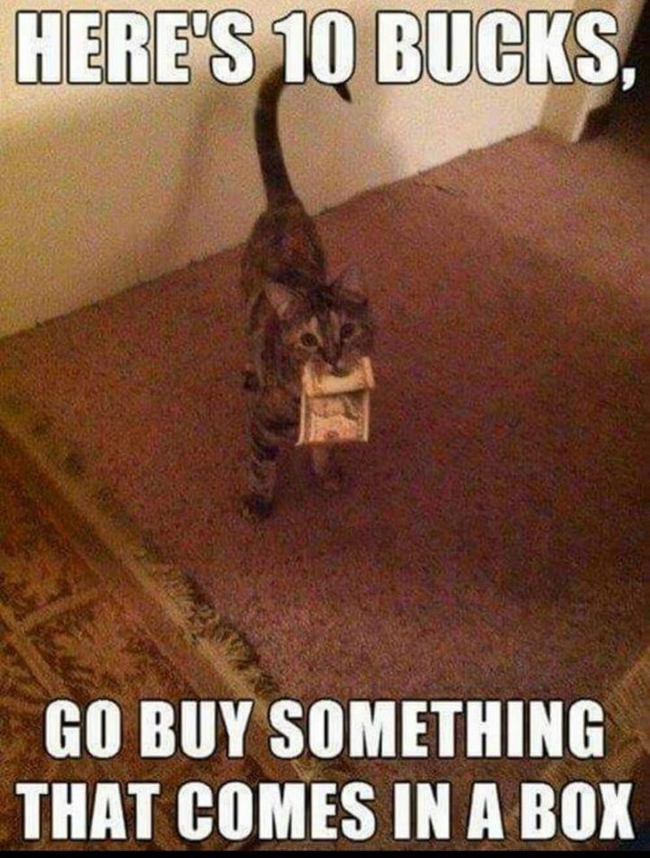 "55 Funny Cat Memes - ""Here's 10 bucks, go buy something that comes in a box."""