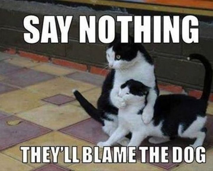 "55 Funny Cat Memes - ""Say nothing. They'll blame the dog."""