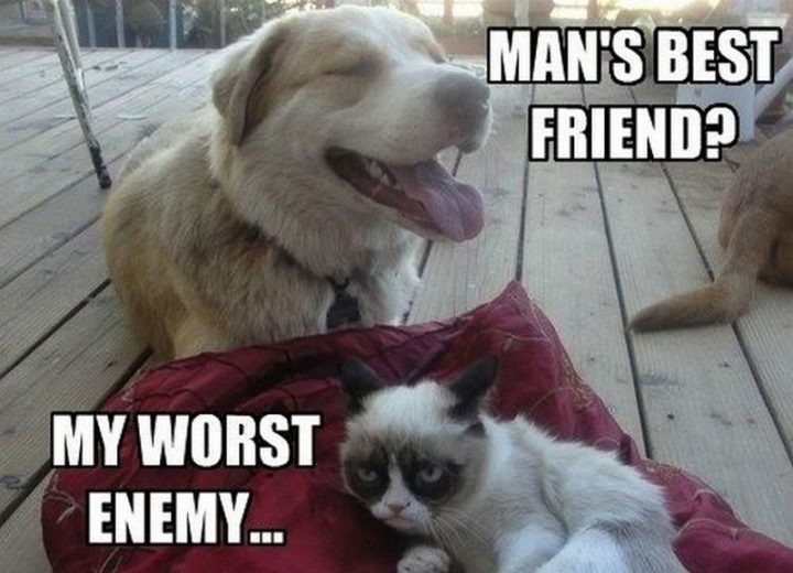"55 Funny Cat Memes - ""Man's best friend? My worst enemy..."""