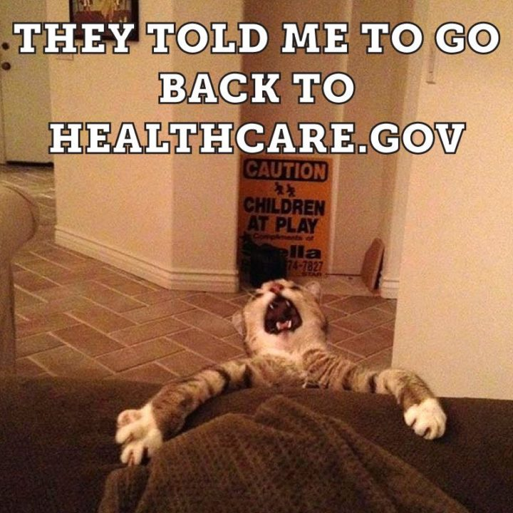 "55 Funny Cat Memes - ""They told me to go back to healthcare.gov"""