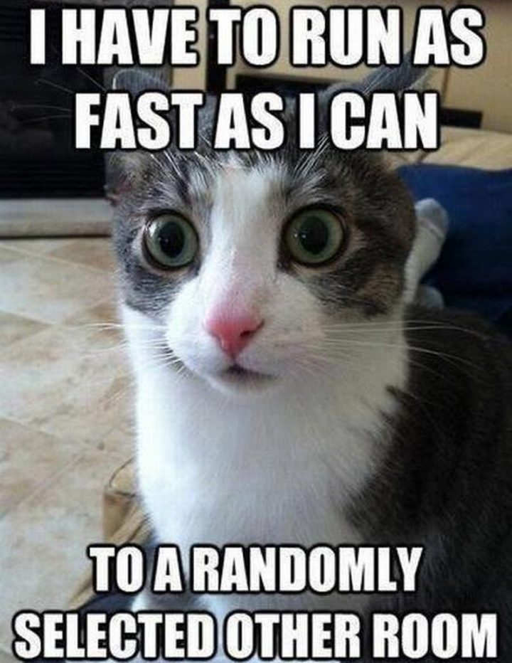 "55 Funny Cat Memes - ""I have to run as fast as I can to a randomly selected other room."""