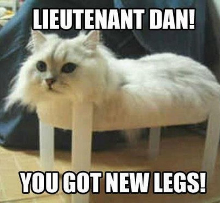 "55 Funny Cat Memes - ""Lieutenant Dan! You got new legs!"""
