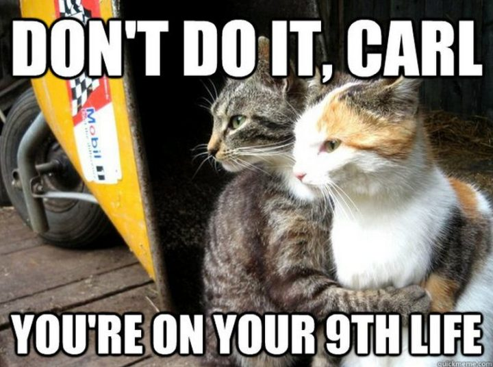"55 Funny Cat Memes - ""Don't do it, Carl. You're on your 9th life."""