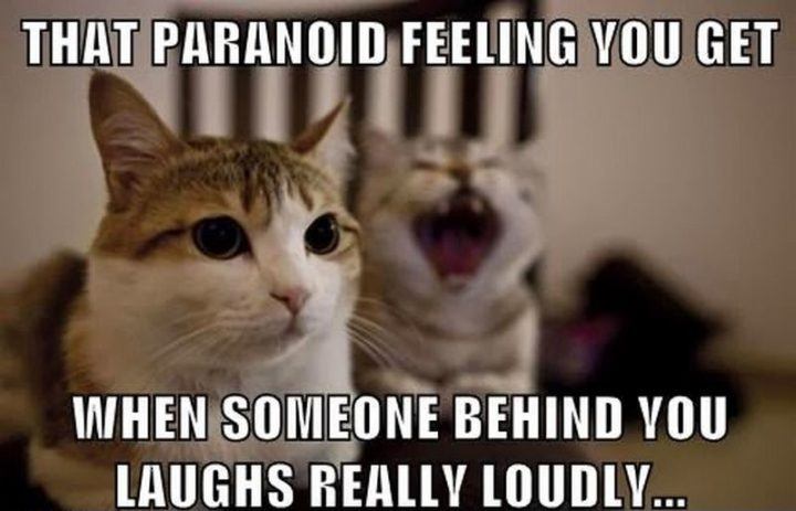 "55 Funny Cat Memes - ""That paranoid feeling you get when someone behind you laughs really loudly..."""