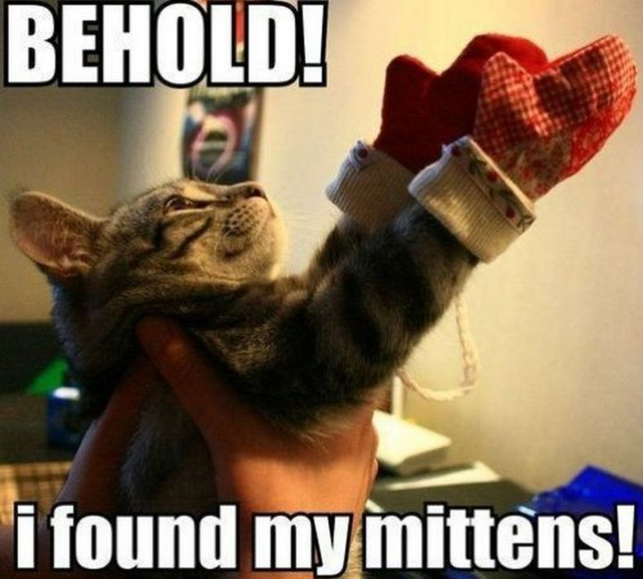 "55 Funny Cat Memes - ""Behold! I found my mittens!"""