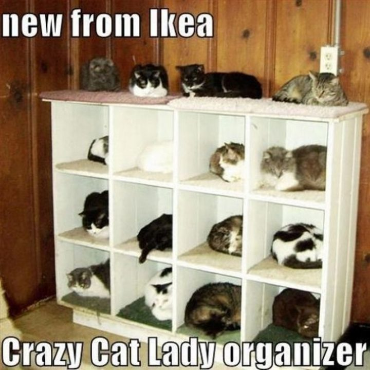 "55 Funny Cat Memes - ""New from IKEA. Crazy Cat Lady organizer."" Don't forget this IKEA doll bed perfect for cats!"