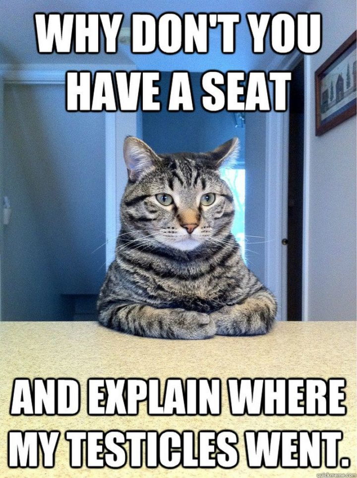 "55 Funny Cat Memes - ""Why don't you have a seat and explain where my testicles went."""