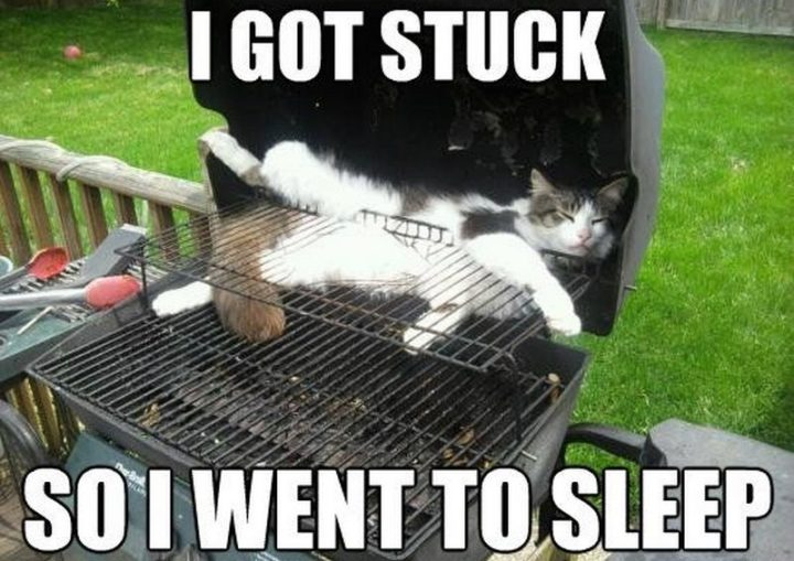"55 Funny Cat Memes - ""I got stuck so I went to sleep."""