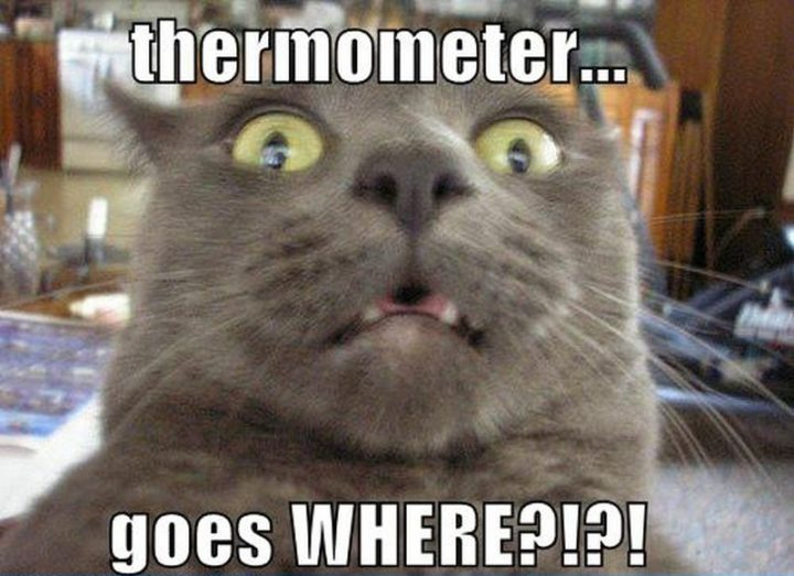 "55 Funny Cat Memes - ""Thermometer goes WHERE?!?!"""
