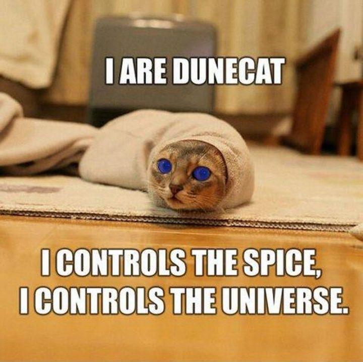 "55 Funny Cat Memes - ""I are dunecat. I controls the spice, I controls the universe."""
