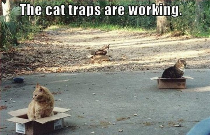 "55 Funny Cat Memes - ""The cat traps are working."""