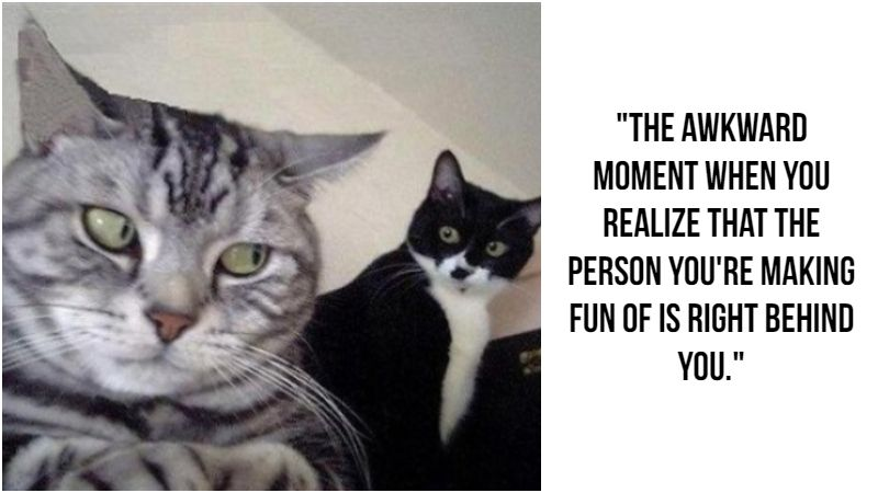 55 Funniest Cat Memes Ever Will Make You Laugh Right MEOW!