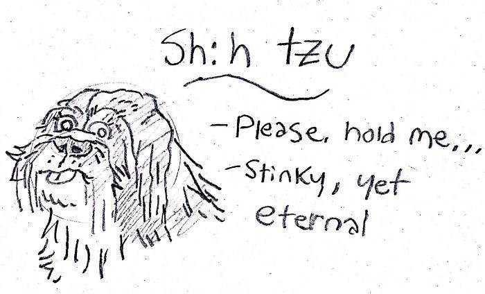 Funny Guide to Dog Breeds - Shih Tzu.