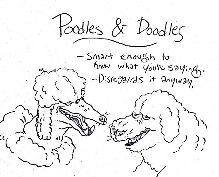 Funny Guide to Dog Breeds - Poodles and Doodles.
