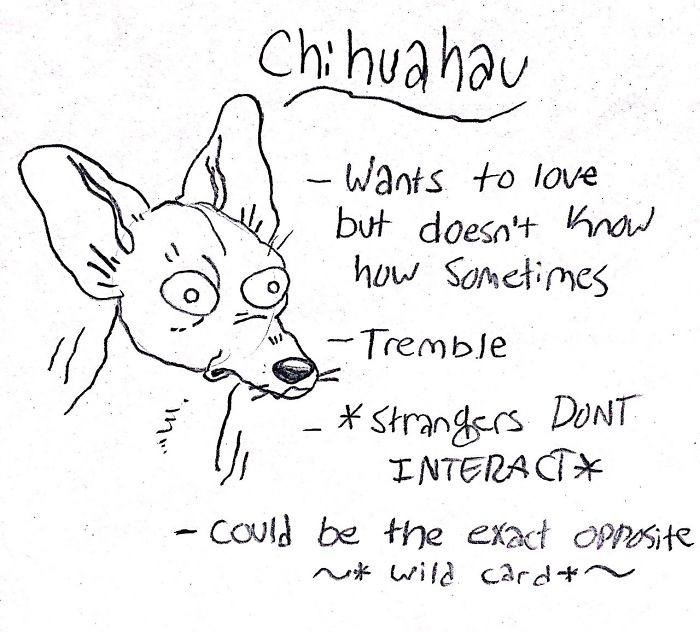 Funny Guide to Dog Breeds - Chihuahua.