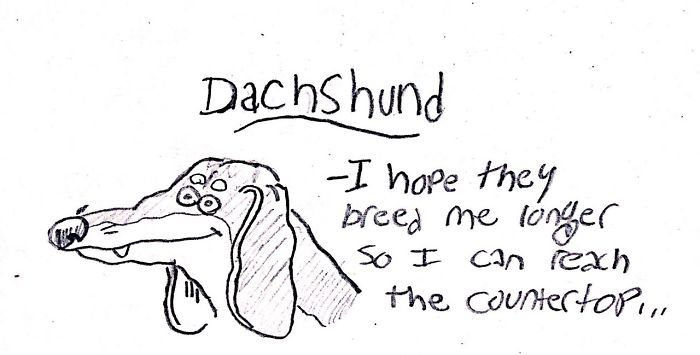 Funny Guide to Dog Breeds - Dachshund.