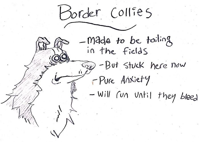 Funny Guide to Dog Breeds - Border Collies.