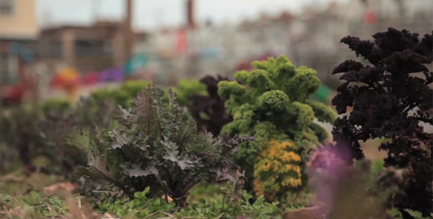 """Our Land: Solution to Pollution"" Short Film Spotlights Urban Farming."