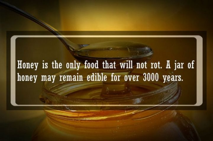 "19 Food Facts - ""Honey is the only food that will not rot. A jar of honey may remain edible for over 3000 years."""