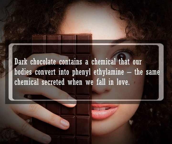 "19 Food Facts - ""Dark chocolate contains a chemical that our bodies convert into phenylethylamine - the same chemical secreted when we fall in love."""
