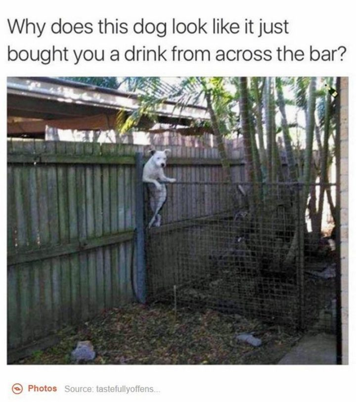"101 best funny dog memes - ""Why does this dog look like it just bought you a drink from across the bar?"""