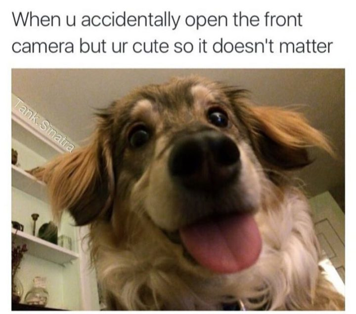 "101 best funny dog memes - ""When u accidentally open the front camera but ur cute so it doesn't matter."""