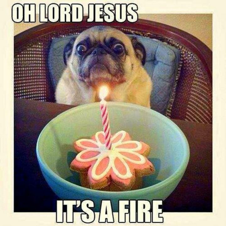 "101 best funny dog memes - ""Oh lord, Jesus. It's a fire."""