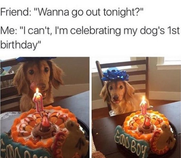 "101 best funny dog memes - ""Wanna go out tonight?"""