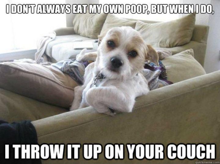 101 best funny dog memes -