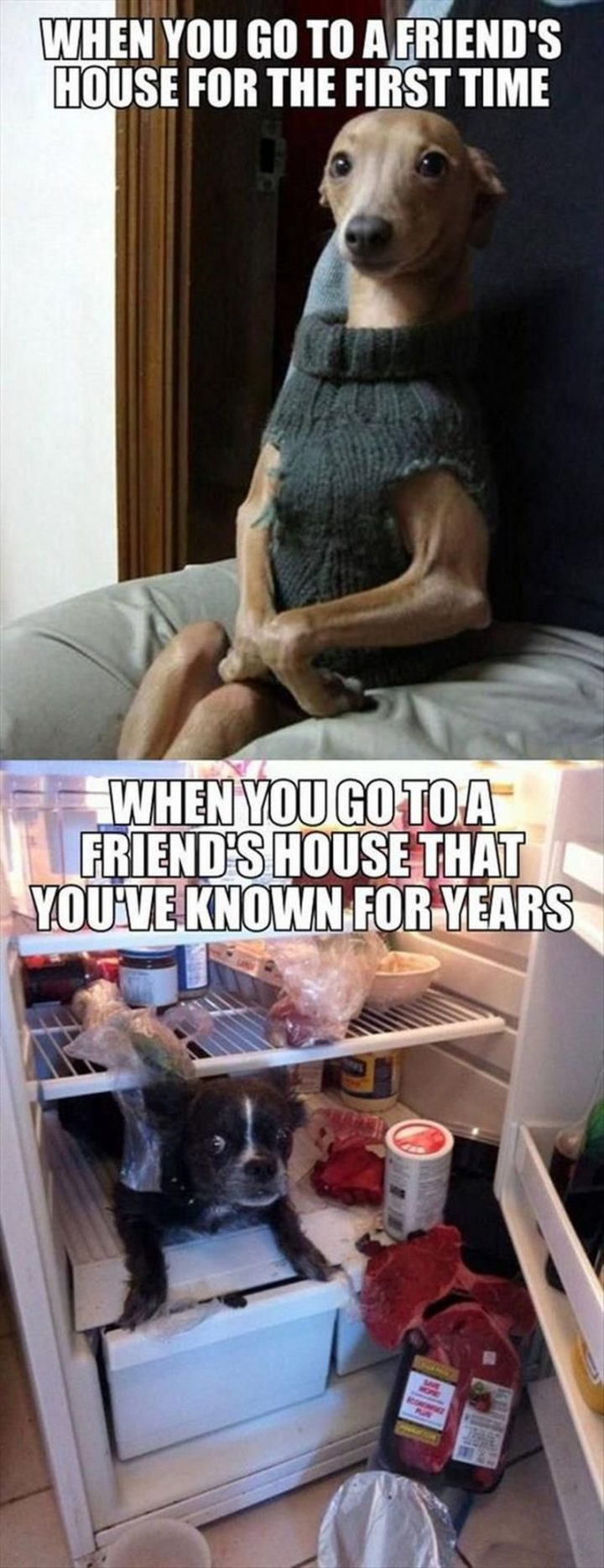 "101 best funny dog memes - ""When you go to a friend's house for the first time. When you go to a friend's house that you've known for years."""