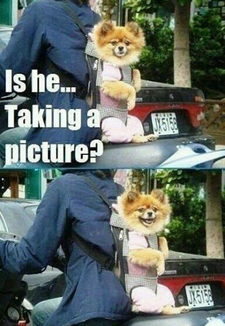 "101 best funny dog memes - ""Is he...taking a picture?"""