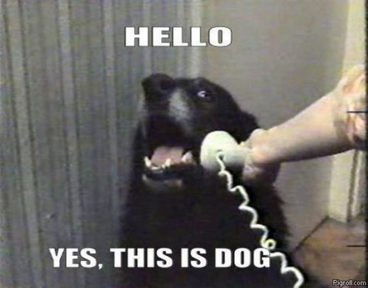 "101 best funny dog memes - ""Hello. Yes, this is dog."""