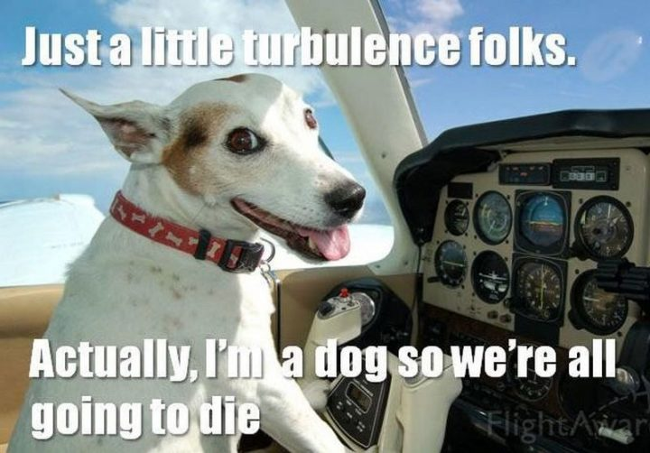 "101 best funny dog memes - ""Just a little turbulence folks. Actually, I'm a dog so we're all going to die."""
