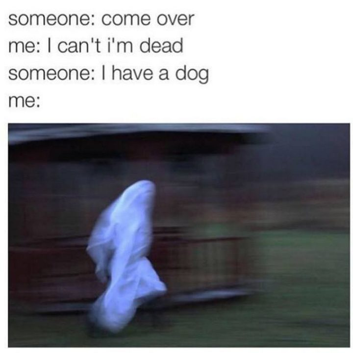 "101 best funny dog memes - ""Come over."""