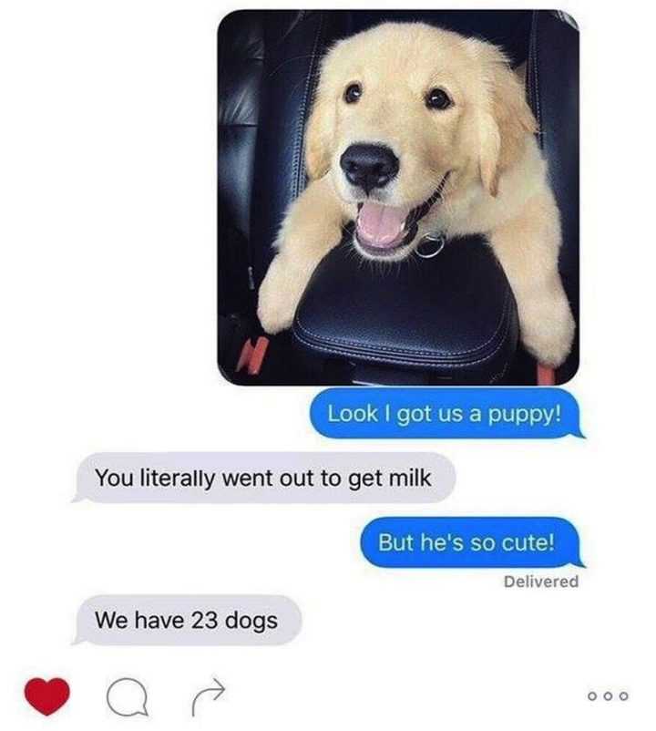 "101 best funny dog memes - ""Look I got us a puppy! You literally went out to get milk. But he's so cute! We have 23 dogs."""