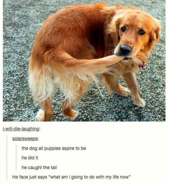 "101 best funny dog memes - ""The dog all puppies aspire to be. He did it. He caught the tail."""