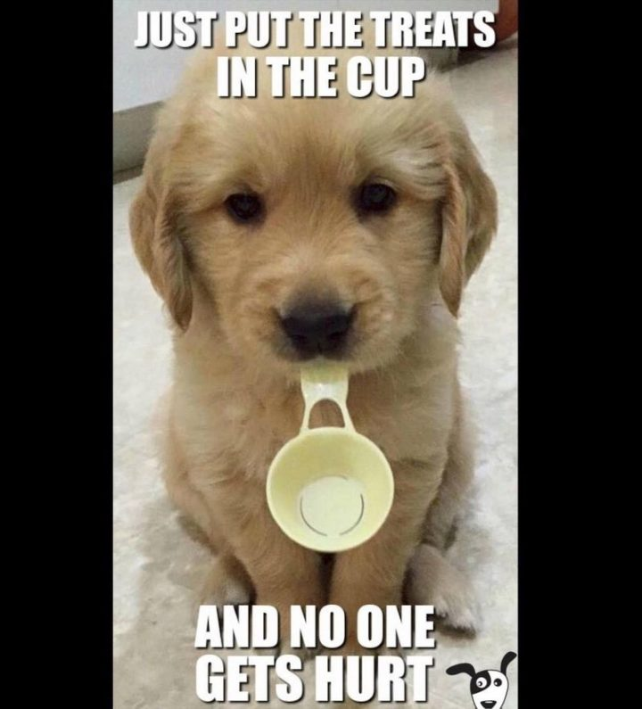 "101 best funny dog memes - ""Just put the treats in the cup and no one gets hurt."""