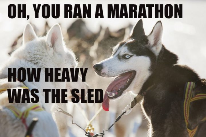 "101 best funny dog memes - ""Oh, you ran a marathon. How heavy was the sled."""